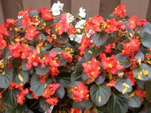 Комнатные цветы которые любят прямые солнечные лучи