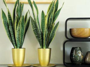 Комнатные растения для темных помещений и комнат
