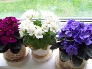 Какие цветы можно выращивать без солнечного света?