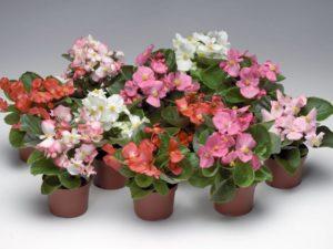 Домашние красивоцветущие растения