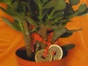Денежное дерево польза для здоровья — О цветах