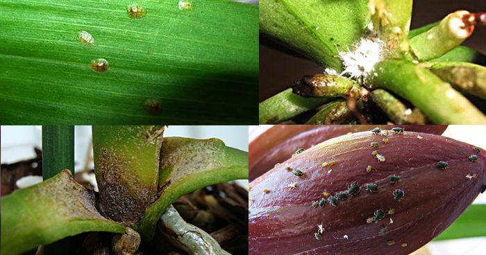 Орхидея — уход в домашних условиях после покупки в магазине и пересадка, полив фаленопсиса микс и как реанимировать орхидею